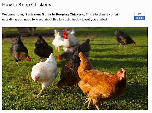 How to keep chickens article keyword density example